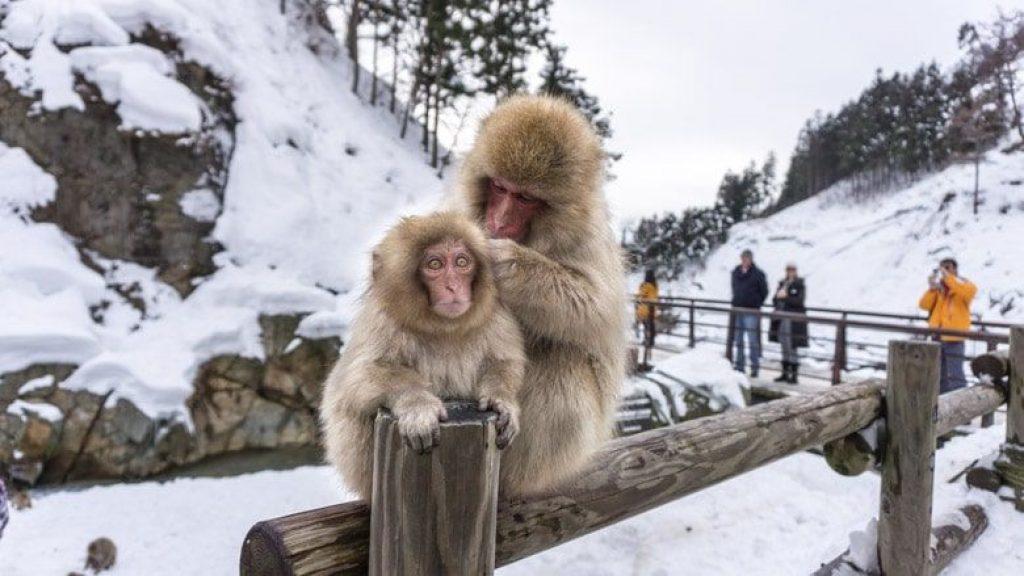 zăpadă alb și fermecător datând din viața reală)