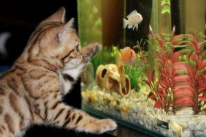 cel mai bun acvariu