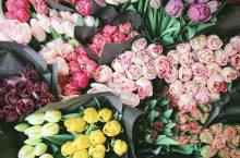 Cele mai frumoase flori de primăvară pentru 1 Martie 2021 – Păreri, sfaturi și recomandări